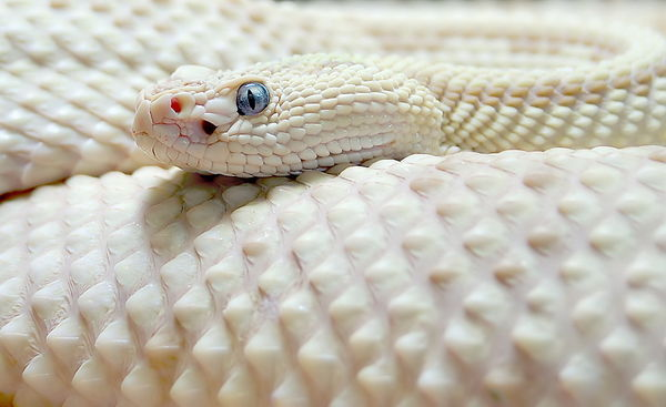 Very Rare Reptiles Reptiles Are Very Interesting